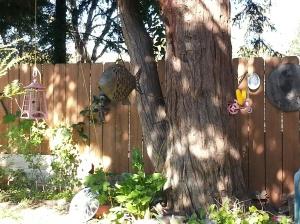 Backyard.abundance